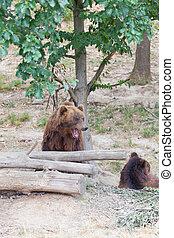 크게, 캄챠카, 불곰, 중의한 사람으로, 돌, 에서, 그만큼, 나무