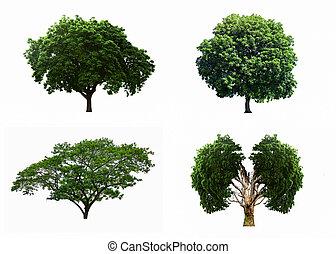크게, 4, 나무, 은 놓는다, 고립된, 백색 위에서, 배경.