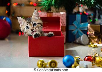 크리스마스., 귀여운, 고양이 새끼