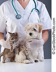 클로우즈업, 동물, 애완 동물, 의사