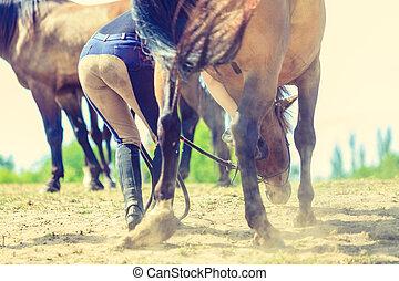 클로우즈업, 세피아, 사진, 의, 암흑, 말, 다리, 달리기