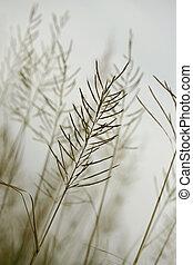 클로우즈업, 식물상