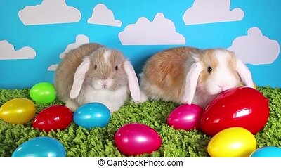 토끼, 토끼, 이스터 에그, 다채로운, 달걀, 귀여운, 애완 동물, 동물, 동물