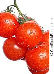 토마토, 습기