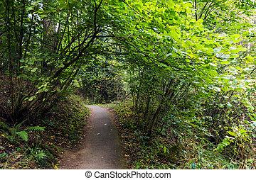 통로, 길게 나부끼다, 완전히, a, 녹색의 숲