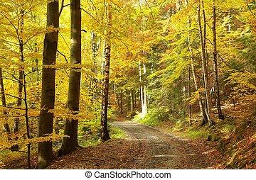 통로, 완전히, 가을 숲
