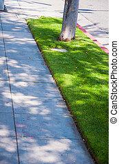통로, 완전히, a, 녹색, 도시 공원