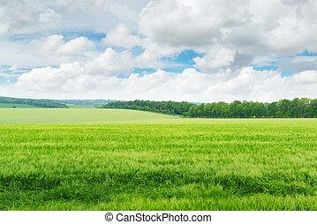 파랑, 들판, 하늘, 녹색