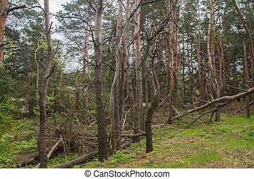 파멸시키게 된다, 폭풍우, 숲