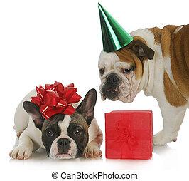 파티, 강아지