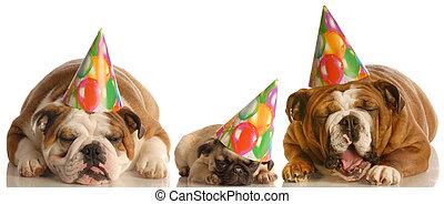 파티, 많이, 생일