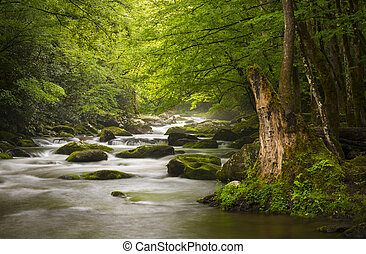 평화로운, 그레이트 스모키 산악 국립 공원, 안개가 지욱한, tremont, 강, 몸을 나른하게 하는, 성격...