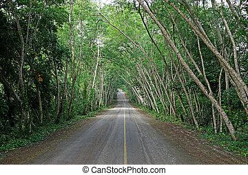 평화로운, 길, 완전히, a, 숲