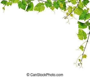 포도 나무, 신선한, 경계