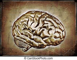 포도 수확, 뇌