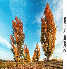 포플라 나무, 와, 길, 에, 가을