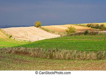 폴란드어, 시골, 조경술을 써서 녹화하다