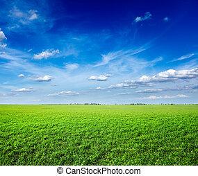 푸른 하늘, 들판, 녹색, 억압되어, 신선한, 풀