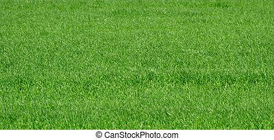 풀, 녹색