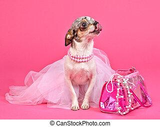 핑크, 매력, 개, 작은, 부속물