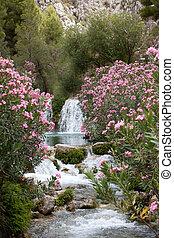 핑크, 식물, 꽃, 나무, 폭포, 물