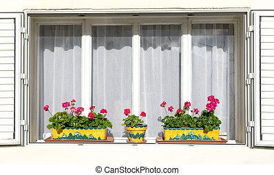 하얀 꽃, windowsills, 빨강