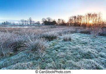 해돋이, 위의, 습지, 에서, 추위, 아침