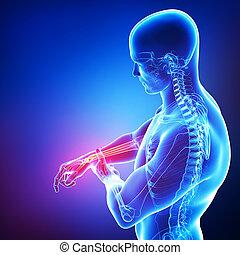해부학, 의, 남성, 손, 고통, 통하고 있는, 파랑