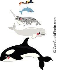 해양 포유 동물, 물때