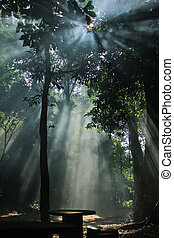 햇빛, 자연