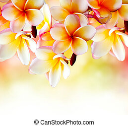 협죽도과의 관목, 열대적인, 광천, flower., plumeria, 경계, 디자인