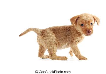 호기심이 강한, 갈색의, 강아지