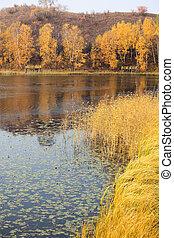 호수, 풍경, 에서, 가을