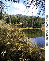 호수, mamie, 2