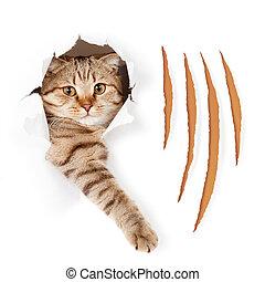 혼자서 젓는 길쭉한 보트, 고양이, 에서, 찢는, 벽지, 구멍, 와, 집게발, 공급 절감, 고립된