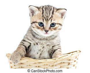 혼자서 젓는 길쭉한 보트, 작다, 고양이 새끼, 에서, 등나무 바구니