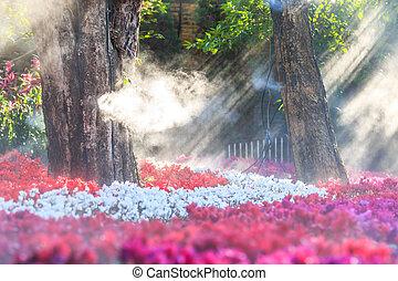 화원, (cyclamen, flowers)