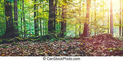 황금, 가을, 장면, 에서, a, forest., 저녁, 밝은 태양, 광선, 도래, 완전히, 그만큼, 나무,...