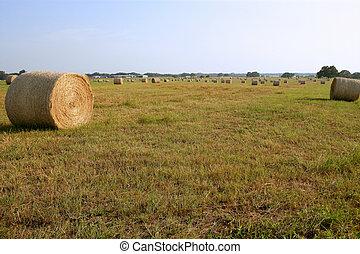 황금, 짚, 건초 곤포, 에서, 미국 영어, 시골