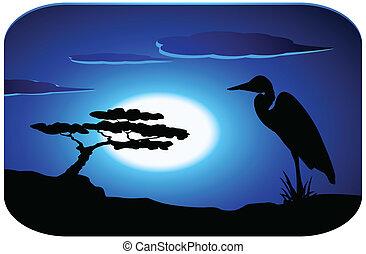 황새, 해돋이