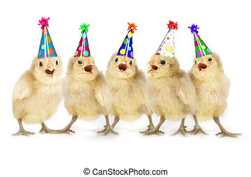 황색, 아기, 병아리, 노래하는, 생일 축하합니다