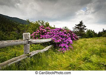 회색빛 털의 말, 산, 상태 공원, 조각가, 빈 곳, 만병초, 꽃, 은 개화한다, 자연, 옥외, 와, 나무의...