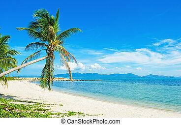 - , διακοπές , τροπικός , φόντο , σιάμ , παραλία
