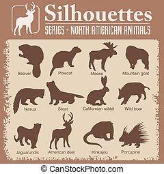 -, シルエット, 北アメリカ人, animals.
