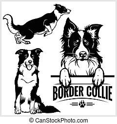 -, ベクトル, コリー, 隔離された, 白い背景, 犬, セット, イラスト, ボーダー