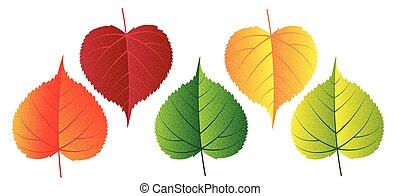 -, ベクトル, 要素, カラフルである, 秋, 落ちる, デザイン, 葉