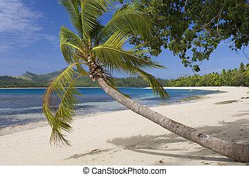-, 太平洋, 熱帯 楽園, フィージー, 南