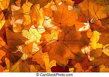 -, 背景, 秋