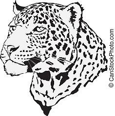 -, 豹, 插圖, 股票