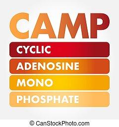-, adenosine, acampamento, cyclic, monophosphate